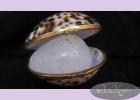 Кристалл свежести 70 гр ТИГРОВАЯ РАКОВИНА  в тигровой тихоокеанской раковине и пакете